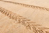 Quad traces on the beach sand
