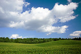 Summer landscape with field, forest and blue sky