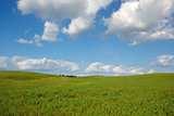 Summer landscape with meadow and blue sky