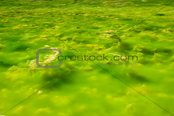 Water with Green Algae