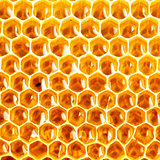honey in honeycomb closeup