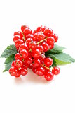 Organic sweet ripe red currant
