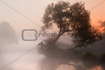 Beautiful foggy sunrise landscape over river with trees