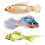 Three toy small fishes isolated on a white background.