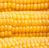 Sweetcorn background