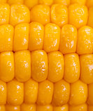 Closeup maize background