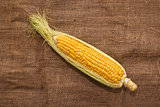 Ear of corn on sack texture