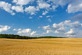 Summer landscape with a field and blue sky