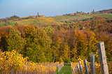 Landscape with Vineyard in fall