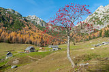 Rowan tree on mountain meadow