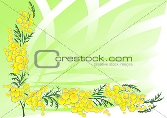 Abstract mimosa branches with background