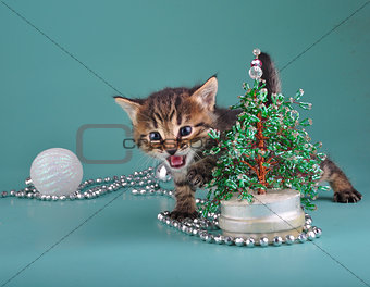 kitten against Christmas tree