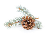 blue spruce twig with cone