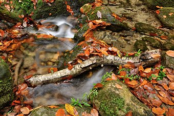 Autumn creek