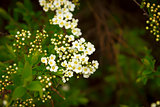 white and yellow flowers against green bush background