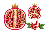 vector pomegranate with grains and leaves