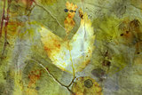 Distressed background with autumn leaves