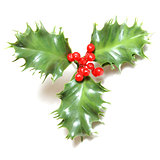 Fake Holly