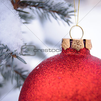 Beautiful Red Christmas Ball on the Fir Branch Covered with Snow