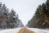 Road in the forest in winter