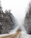 Winter road and the forest in snow