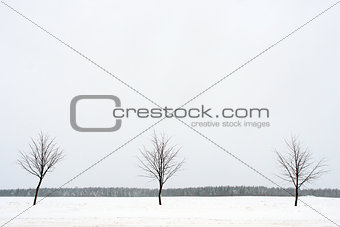 Three trees in the snow field in winter