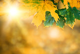 autumn leaves with sunlight and bokeh