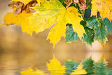 autumn leaves, reflecting in water