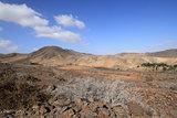 Wild landscape (Fuerteventura - Spain)