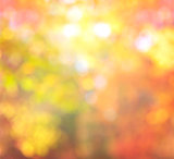 Abstract Blur Background Autumn Trendy Colors with natural Bokeh with sun lights