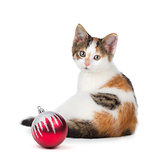 Cute calico kitten sitting next to a Christmas Ornament on a whi