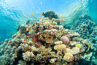 corals in the sea