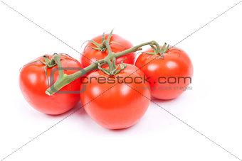 tomatos on a vine on a white background