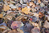 fall leaves texture background