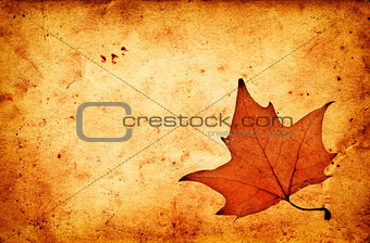 Autumn maple leaf on grunge old paper
