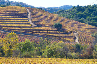 fall at wine country