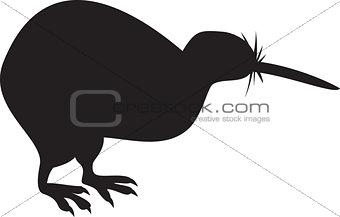 Kiwi Bird Isolated