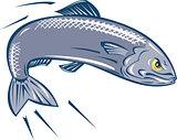 Angry Sardine Fish Jumping