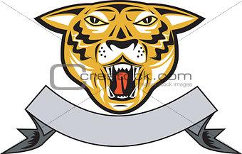 Tiger Head Growl Head Isolated