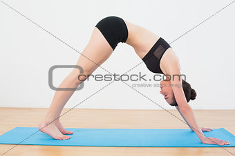 Fit woman doing the Downward Facing Dog pose