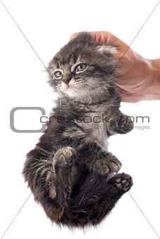 kitten in hand