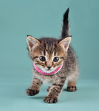 studio portrait of little kitten with Indian bracelets