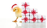 Christmas chicken with presents