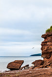 Beautiful Landscape of a Cliff and Seagull Passing by