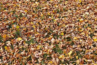 Fall autumn season
