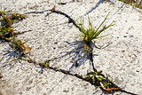 grass growing through the concrete
