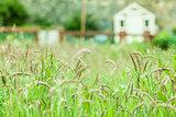Rural scene of a field