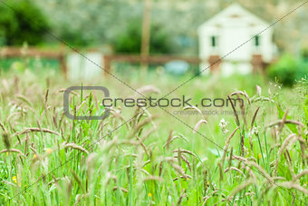 Rural scene of a field