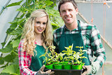 Smiling couple showing carton of small plants