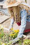 Blonde woman planting yellow flowers